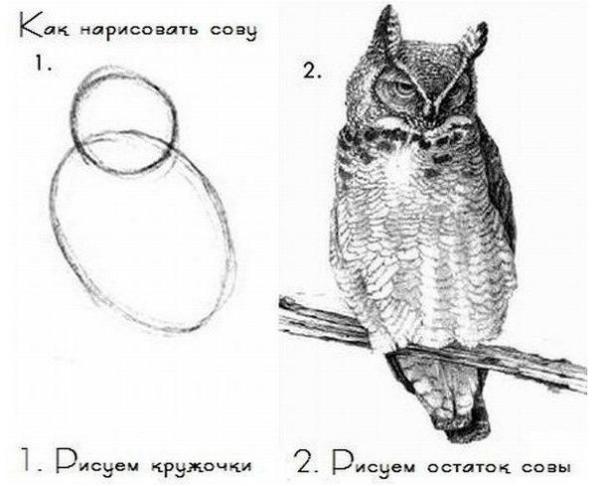 Мем о рисовании совы используют для описания подходов к обучению на некачественных онлайн-курсах